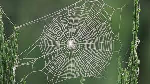 spider, web, normal, stress, peace, joy, serenity