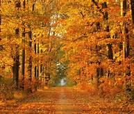 autumn, leaves, Robert Frost, peace, joy, serenity