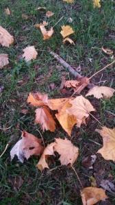leaves, fall, autumn, meditation, mindfulness, life, inspirational, hope, peace, nature, lifesjourney
