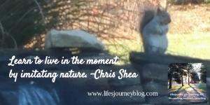 squirrel, life, mindfulness, meditation, zen, peace, inspirational, lifesjourney, Chris Shea, nature, pond, water